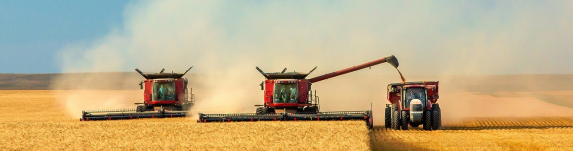 GMO-Free Wheat Breeds