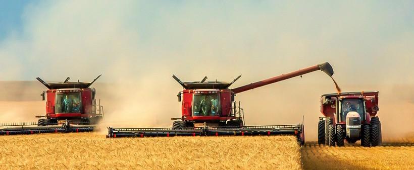 GMO-Free Wheat Breeds