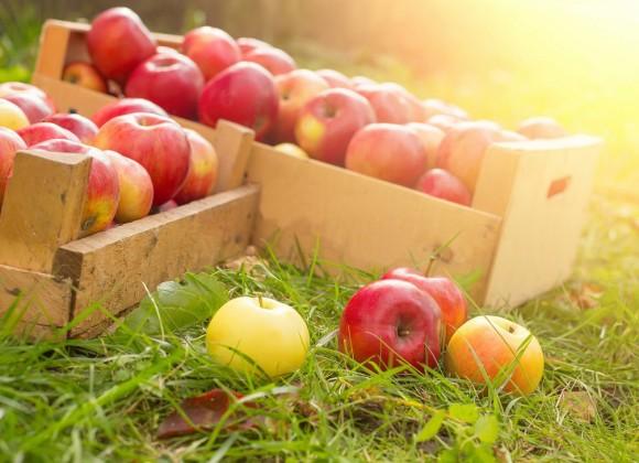 Fruit Picking Season is Coming!